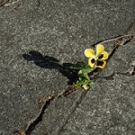 Research finds flowers growing in cracks similar to those on cliffs, slopes.