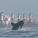 WhaleAndShip